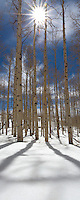 A sunburst captured among aspen trees in fresh snow.