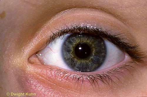 SN02-008z  Human eye - sight