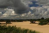 Bloeiende heide in Drents-Friese Wold