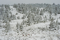 Snow in Yellowstone National Park