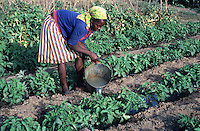 Woman farmer watering tomatoes