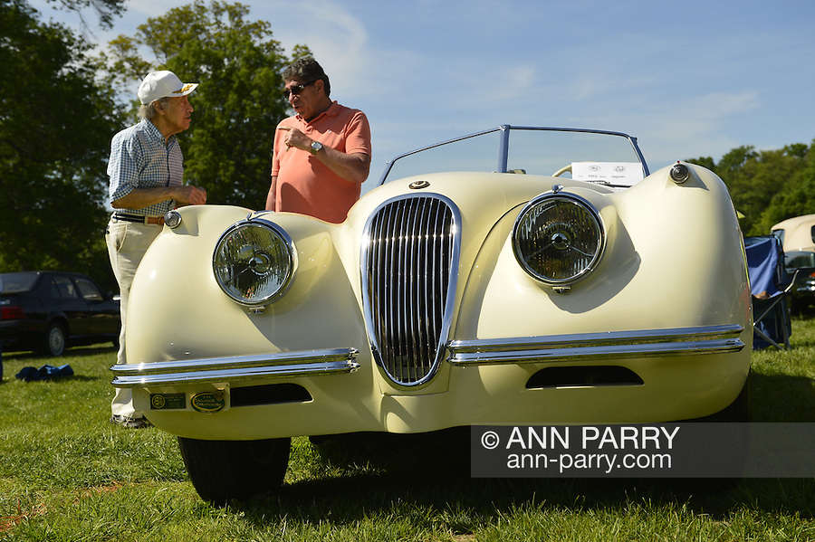 Old Westbury, New York, U.S. - June 1, 2014 - Owner BERNARD HOFFMAN of WOODMERE, in orange top, chats with a visitor about Hoffman's cream 1952 Jaguar XK 120, an entry at the Antique and Collectible Auto Show held on the historic grounds of elegant Old Westbury Gardens in Long Island, and sponsored by Greater New York Region AACA Antique Automobile Club of America.
