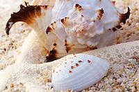 Shells and seastar on sand