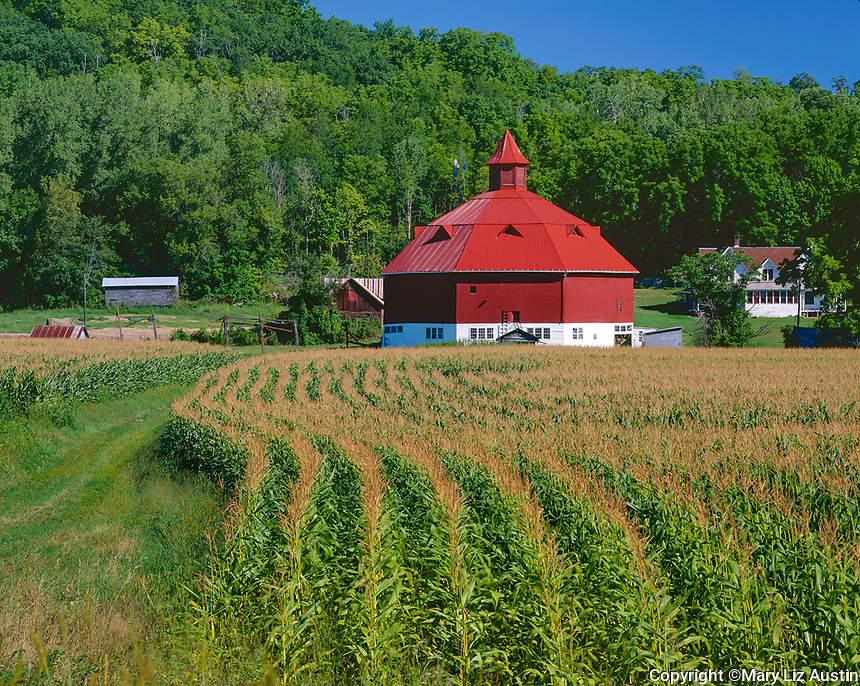 Pepin County, WI<br /> Farm with octagonal red barn and curving rows of corn in a valley under forested hills