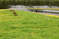 Trabalhadores da Jarí trabalham no viveiro de mudas de eucalipto,  gênero de arbustos ou árvores de grande porte, da família das mirtáceas, usado  para plantio de extensas áreas de espécie para posterior produção de papel e celulose  (grupo Orsa).<br />A fábrica em local próximo,  onde é beneficiada a madeira, foi construída em cima de uma balsa e trazida por empurradores do Japão no final da década de 70 e instalada as margens do rio Jarí, fronteira do Pará com o Amapá.<br />Almeirim, Pará, Brasil.<br />Foto Paulo Santos/Interfoto<br />03/2005.