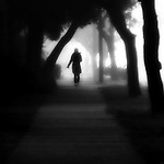 A lone girl walking down a tree covered sidewalk in the fog.