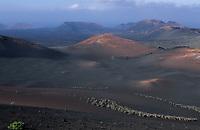 Europe/Espagne/Canaries/Lanzarote/Parc National du Timanfaya : Promenade à dos de chameau dans les paysages volcaniques