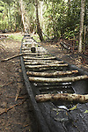 Dugout canoe under construction in the village of Bigiston on the Marowijne River, Suriname.
