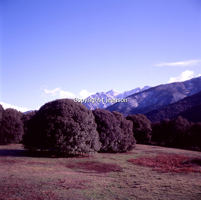 lanscape /Corsica/ on the road to Bastelica/oaktree