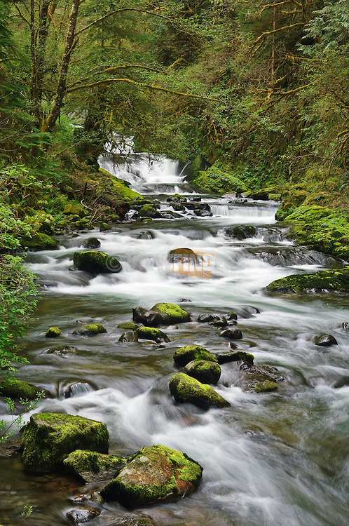 Waterfalls in Sweet Creek, Siuslaw National Forest, Oregon