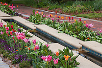 Water rill lined with tulips along brick path flowing from fountain Norfolk Botanical Garden