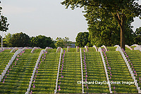 65095-01803 Flags on Memorial Day at Jefferson Barracks National Cemetery, St Louis, MO