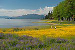 Children play along the west shore of Lake Tahoe with lupin fields and kayak