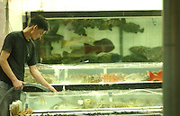 FOOD: REEF FISH: HONG KONG<br /> Coral fishes in tanks outside restaurants in Lei Yue Mun, Hong Kong. The fishes contain bacteria that can be toxic.<br /> Photo by Richard Jones/sinopix<br /> &copy;sinopix
