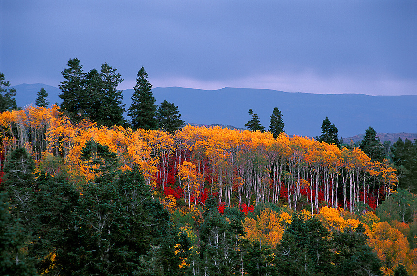 Mount Nebo utah in the wasatch range in fall color