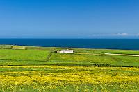 Traditional cottage on the Atlantic coast at Killard, County Clare, West Coast of Ireland