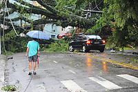 SÃO PAULO, SP - 13.02.2014 - Queda de arvore de grande porte sobre um carro na Rua Amancio de Carvalho em Moema sem vitimas, nesta quinta-feira, 13.   (Foto: Adriano Lima / Brazil Photo Press)