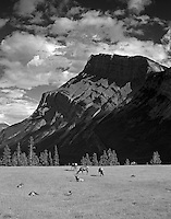 Mount Rundle and Elk in meadow. Banff National Park, Canada.