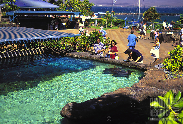Maui Ocean Center, Maalea, Maui