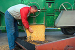 Craig Griffieon inspects his freshly harvested corn as it's transferred from a truck to a drying bin, Griffieon Family Farm, Ankeny, Iowa.