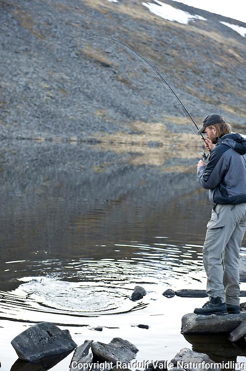 Mann lander ørret i Knivskjelvatna. Norges nordligste ørretvann. ---- Man landing trout in Knivskjelvanta.