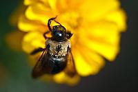 Bee Back Details