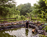 June 30, 2016. Blacksburg, Virginia. <br />  After his daily run, Marc Edwards cools down with his dog Curry in the pond he is building beside his home. An avid runner, Edwards runs approximately 40 miles a week on the trails and roads surrounding his home outside Blacksburg, VA. <br />  Marc Edwards is a civil engineering/environmental engineer and the Charles P. Lunsford Professor of Civil and Environmental Engineering at Virginia Tech. He is an expert in water quality and corrosion, and his work in Washington DC  and in Flint, Michigan helped to expose high levels of lead contamination in the water supplies of those two cities, triggering investigations into the cause of the pollution.