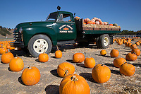 United States of America, California, Santa Barbara County, Solvang at Santa Ynez Valley: Pumpkins at Pumpkin Patch | Vereinigte Staaten von Amerika, Kalifornien, Santa Barbara County, Solvang im Santa Ynez Valley: Kuerbisse der Solvang Farmer Pumpkin Patch