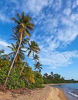 Vieques Island, Puerto Rico<br /> Evening light on palms and deserted bay at Green Beach on Vieques' west end