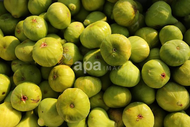 Figs are seen during harvest season at a vineyard in Gaza city on July 18, 2017. Photo by Ashraf Amra