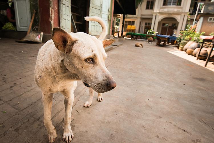 Myanmar,birmanie,Burman,Mandalay,<br /> 2013,september