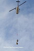 01874-13010 Helicopter lifting a Polar Bear (Ursus maritimus) from the Polar Bear Holding Facility, Churchill, MB