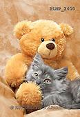 Marek, ANIMALS, REALISTISCHE TIERE, ANIMALES REALISTICOS, cats, photos+++++,PLMP2400,#a#