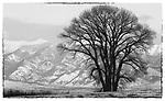 amsterdam, road, hill, bridger, mountains, snow, tree, dark, silouette, farmland