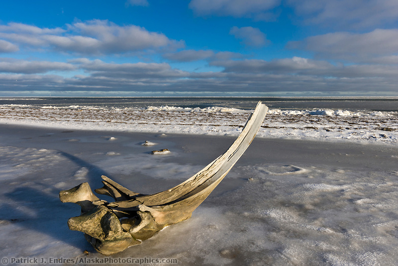Bowhead whale bones on Barter Island, along the Beaufort Sea, Arctic, Alaska.