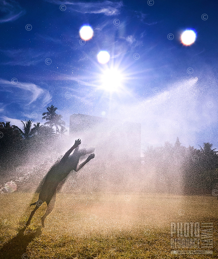 Close Encounters of the Canine Kind: Isabella plays in the spray of a sprinkler on a sunny day at a dog park on O'ahu.