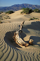 Sand Dunes in California's Death Valley National Monument. Heat, Dry. California USA Death Valley.