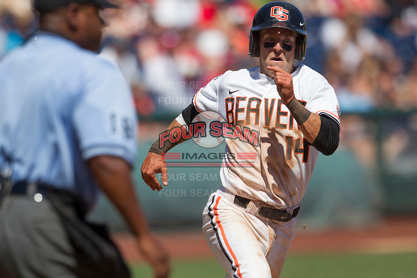 Oregon State second baseman Andy Peterson (14) sprints home to score against the Louisville Cardinals during Game 5 of the 2013 Men's College World Series on June 17, 2013 at TD Ameritrade Park in Omaha, Nebraska. The Beavers defeated Cardinals 11-4, eliminating Louisville from the tournament. (Andrew Woolley/Four Seam Images)
