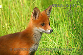 Carl, ANIMALS, wildlife, photos(SWLA2147,#A#)