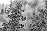 Forest, Columbia Gorge, Oregon
