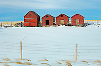 Red wooden graneries in winter<br /> <br /> Alberta<br /> Canada