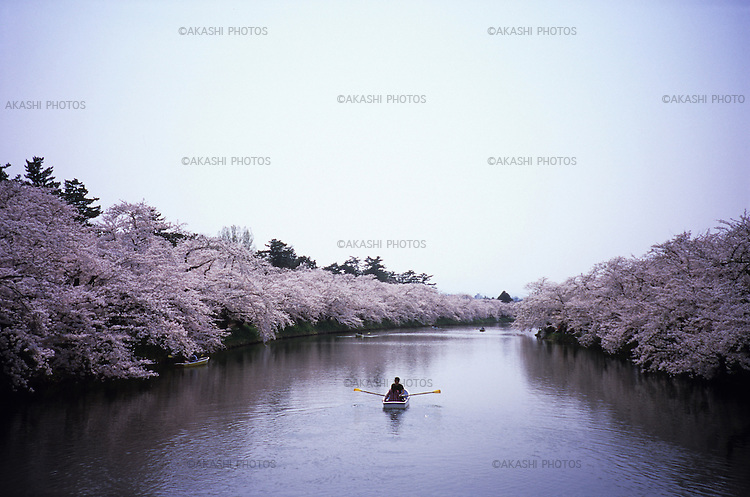 Japanese on a boat in the canal of Hirosaki Castle, Aomori.