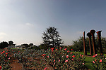 Israel, Wohl Rose Park of Jerusalem, the Knesset building is in the background
