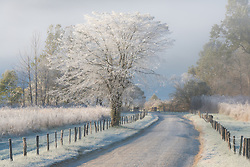 Frost and a light snow in early morning light, Cades Cove, Great Smoky Mountains.<br />