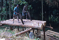 Workers sawing tronks of Pine tree to produce planks
