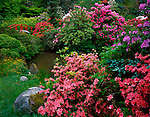 Seattle, WA<br /> Rhododendrons and azaleas blooming in a dazzling display of colors surrounding Moon Bridge