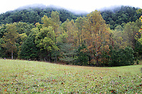 Landscape of cades cove valley slope meadow looks gorgeous as tree take the fall colors and autumn leaves lie on grass in the great smoky mountain national park, Tennessee, America.
