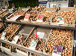 Trays of tulip bulb varieties on display, Rotterdam, Netherlands