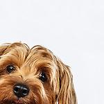 20160606 Ellen Tilt Dogs