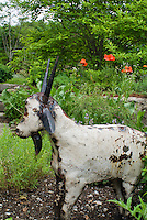 Garden art sculpture Goat animal, poppies, tree
